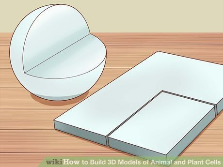 Image titled Build 3D Models of Animal and Plant Cells Step 12