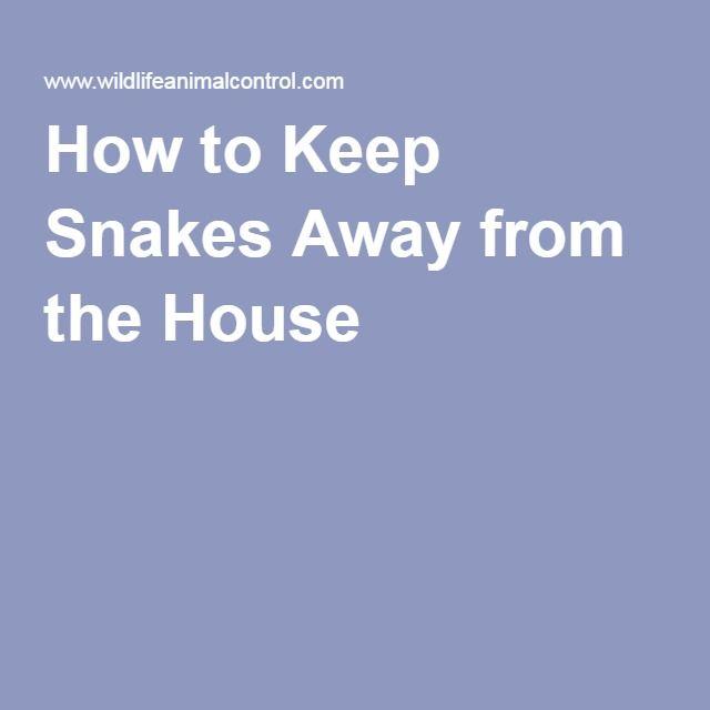 Best 25 Keep Snakes Away Ideas On Pinterest Snake