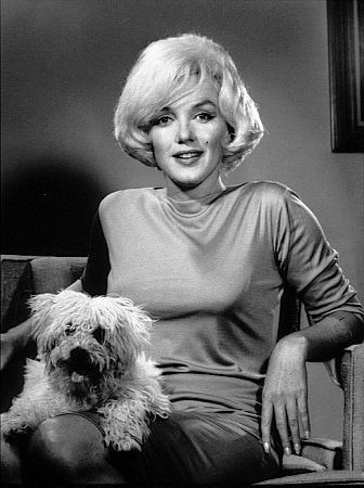 """"""" I like animals. If you talk to a dog or a cat it doesn't tell you to shut up.""""~ Marilyn Marilyn and a true friend, Maf. Maf was a gift from Frank Sinatra"""