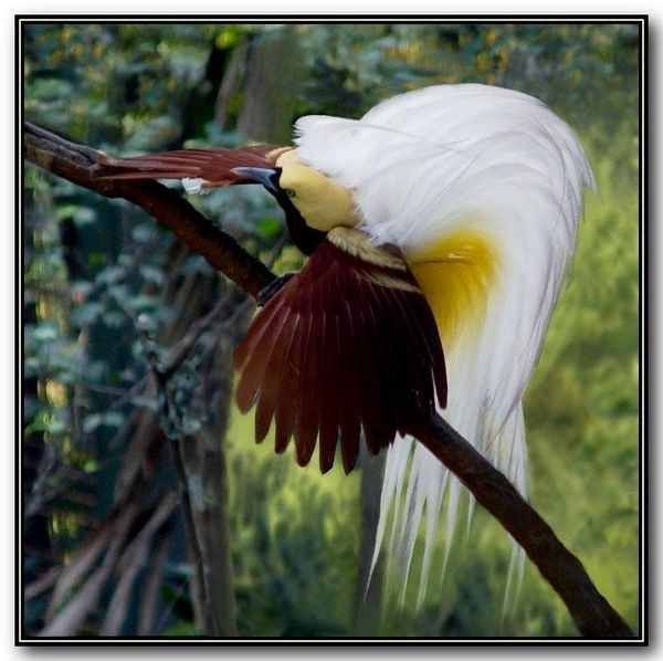 Красивые разноцветные птицы (15 Фото)