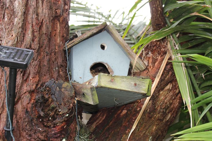 The bird house is locked in between the branches of the tree.