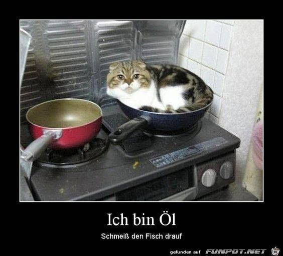 Ich bin Öl, schmeiß den Fisch drauf !