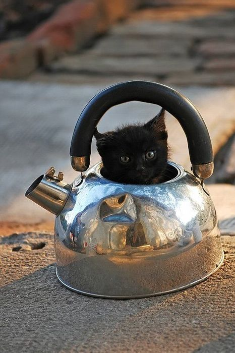 Black Kitten - In a Teapot