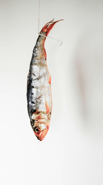 Pesce del lago di como