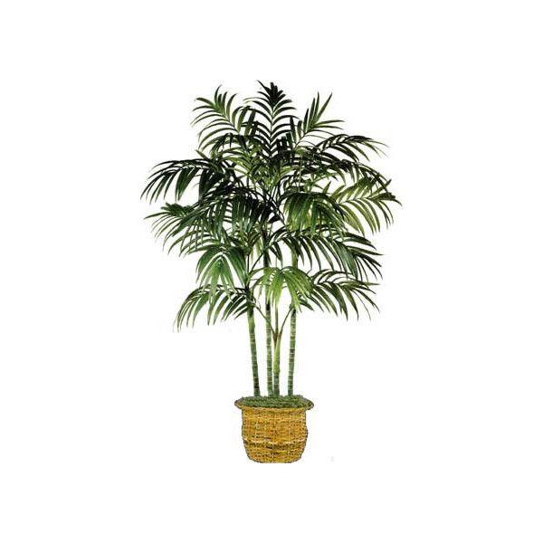25 best ideas about indoor palm trees on pinterest big indoor plants artificial indoor. Black Bedroom Furniture Sets. Home Design Ideas