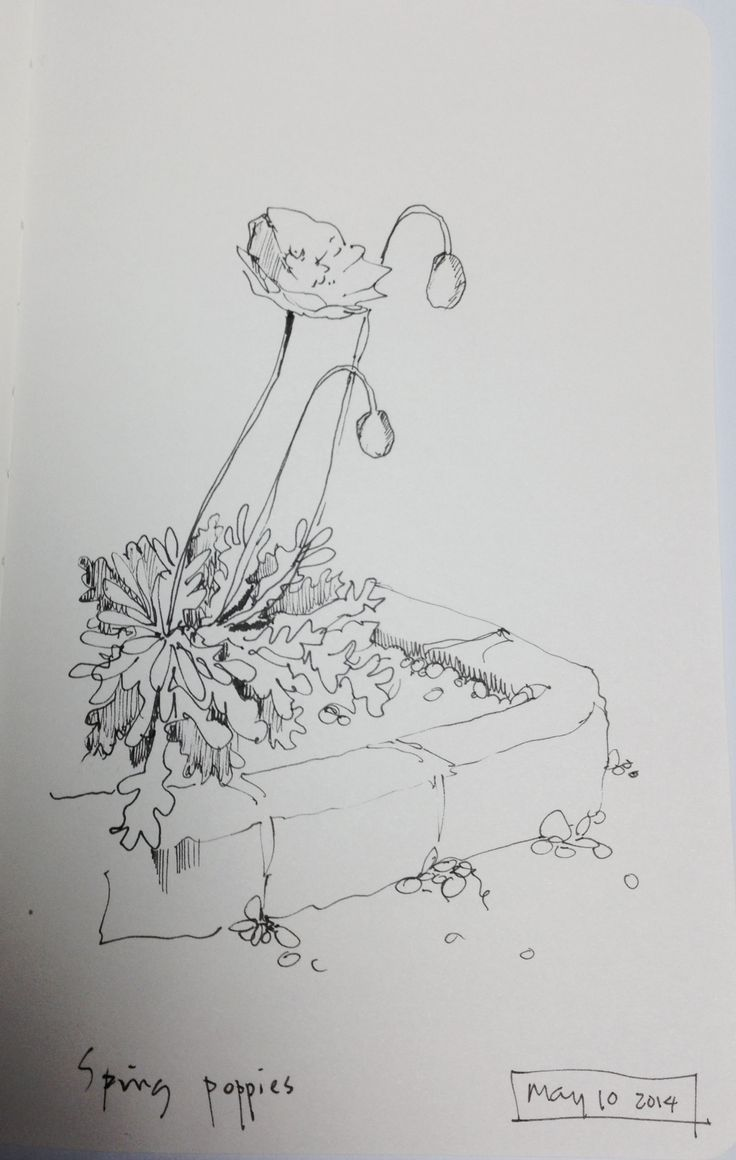 1000 Images About Flowers On Pinterest Drawing Flowers