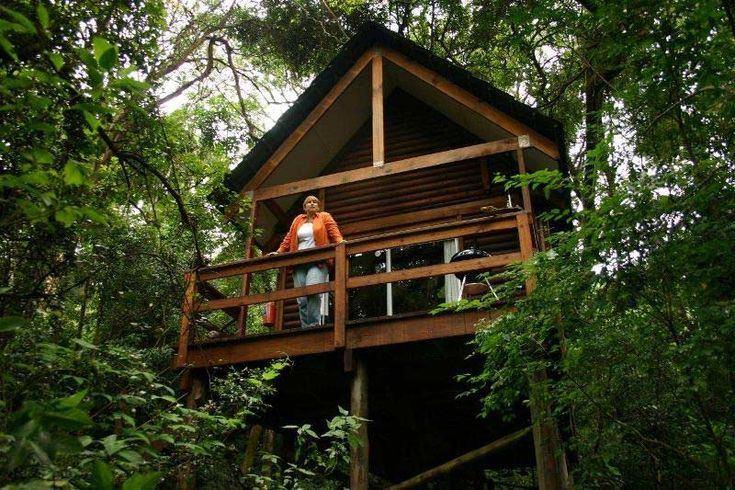 Kurisa Moya Nature Lodge - Stay in one of the secluded Forest Lodge Cabins, three metres up in the canopy of the magical indigenous forest.