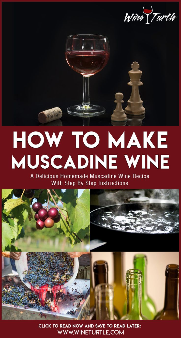 A Homemade Muscadine Wine Recipe You Must Try Muscadine Wine Homemade Wine Homemade Wine Recipes