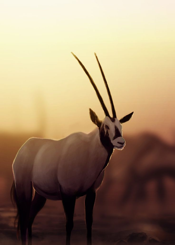 Arabian Oryx by diddleh on DeviantArt