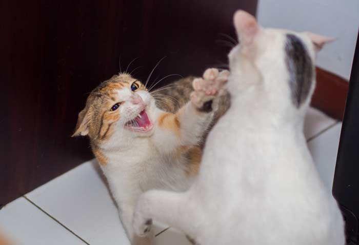 mi gato intenta vomitar y no puede