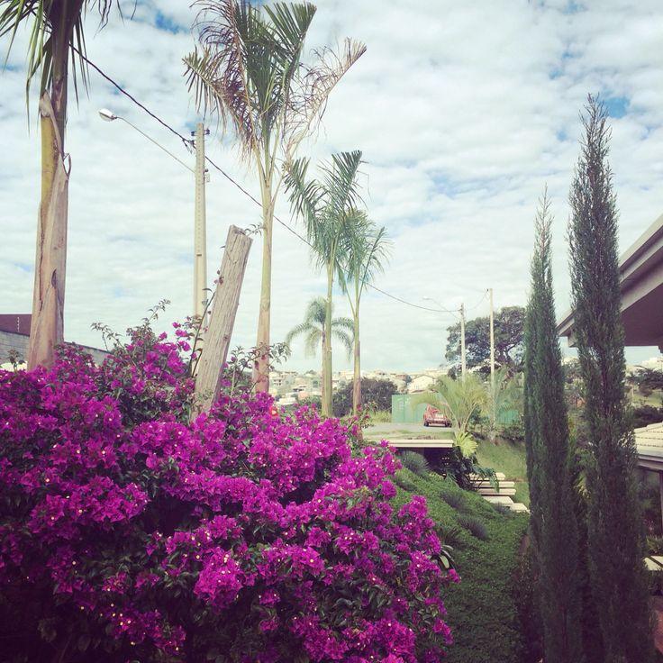 Palmeira imperial a bela gigante do paisagismo
