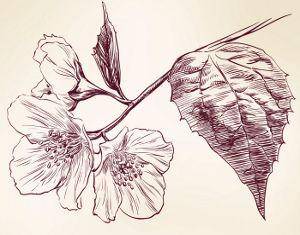 1000 ideas about jasmine flower tattoos on pinterest. Black Bedroom Furniture Sets. Home Design Ideas