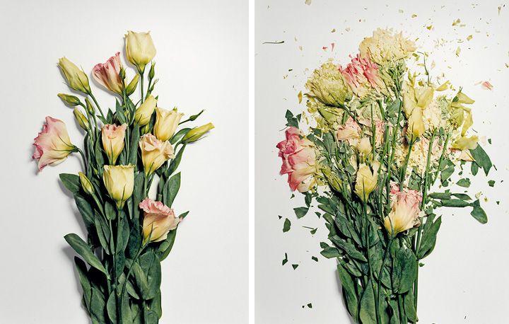 Broken Flowers | iGNANT.de
