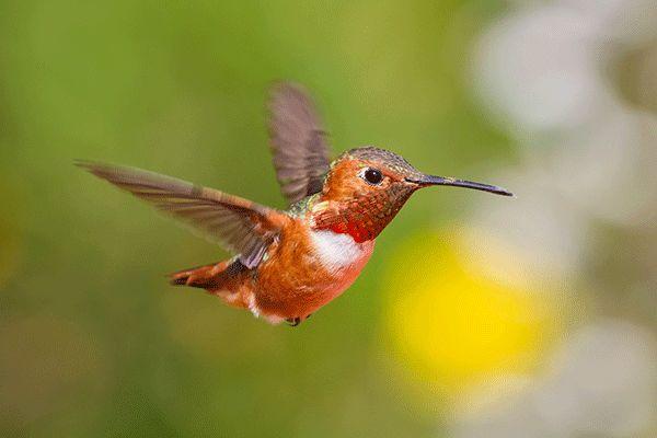 Hummingbird in the garden today