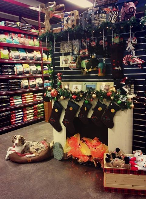 The Global Pet Foods store in Ottawa, Ontario - Bell's Corner location has some great gift ideas for your furkids.   We're sure that you'll find everything you'll need to make sure that your furkids are healthy and happy this winter and holiday season!