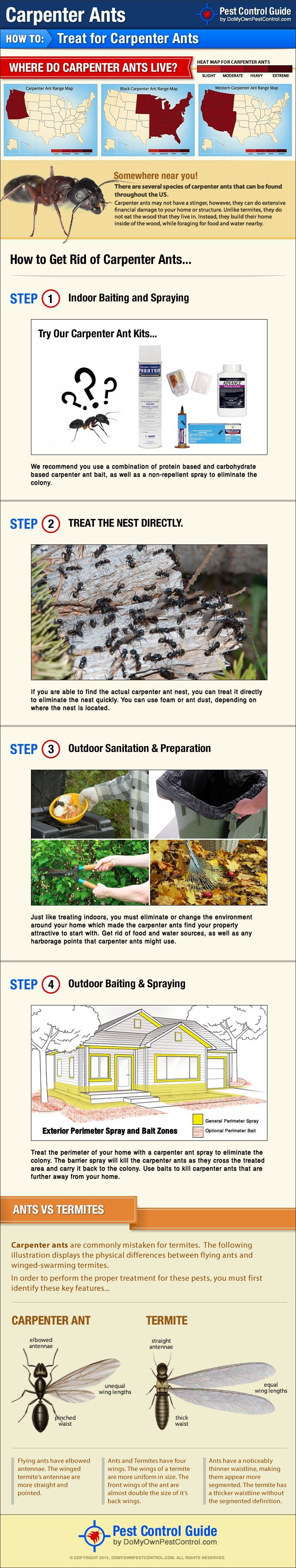 Learn how to get rid of carpenter ants with this new DIY carpenter ant treatment guide. renting a house #frugality #savingmoney
