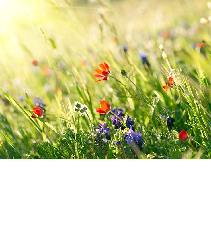 Växterna får magiska krafter under midsommarnatten. Sju olika sorters blommor från sju olika gärdsgårdar avslöjar din framtida kärlek. Om det verkligen fungerar vet vi inte, men visst är det en fin idé?