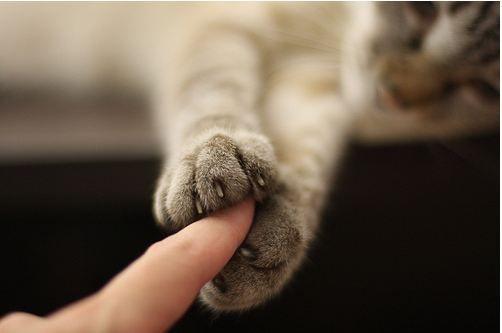 Kitty Cat Finger Trap