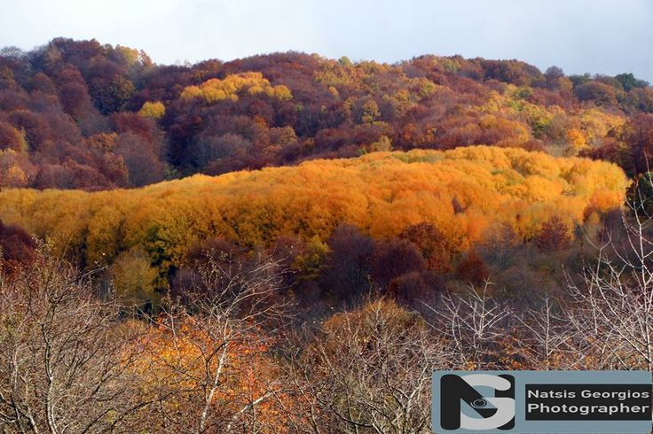 Φθινοπωρινά χρώματα στην ορεινή περιοχή Μακρυπλαγίου - Πολυκάρπου Δράμας 2016 (φωτογραφίες) - DRAMAnia.gr
