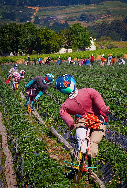 Scarecrows and farm workers in Western Cape, SA