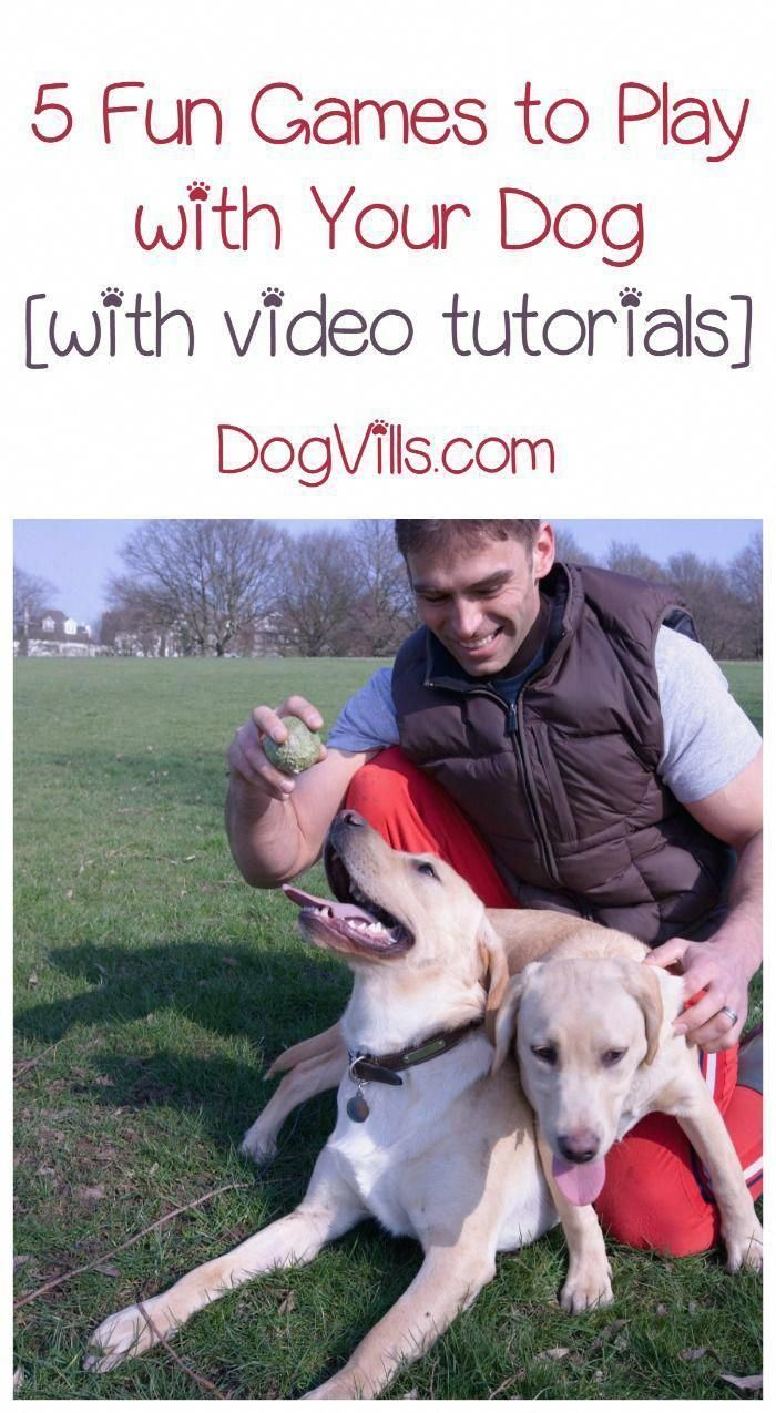 Stop Puppy Biting Fast How To Stop A Puppy From Biting Your Feet