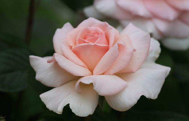 faire livrer un bouquet de fleurs à domicile 021 #fleurs #bouquet