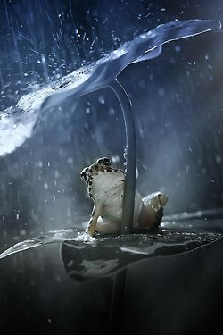 ღ sweet froggy ღ - pinned by https://www.pinterest.com/sy214/all-creatures-great-small/
