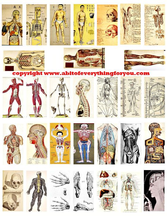 "human anatomy skulls skeletons body parts vintage clip art digital download domino collage sheet 1"" x 2"" inch graphics image printables"