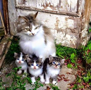 Country Kittens..