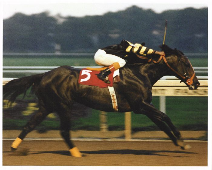 "I see my #OTTB in his grandfather everytime I look at this photo. Bent knees and that ""Seattle Slew"" head. I don't care what anyone says, there's a reason he's the only undefeated Triple Crown Champion. Proud to own a Slew Baby."