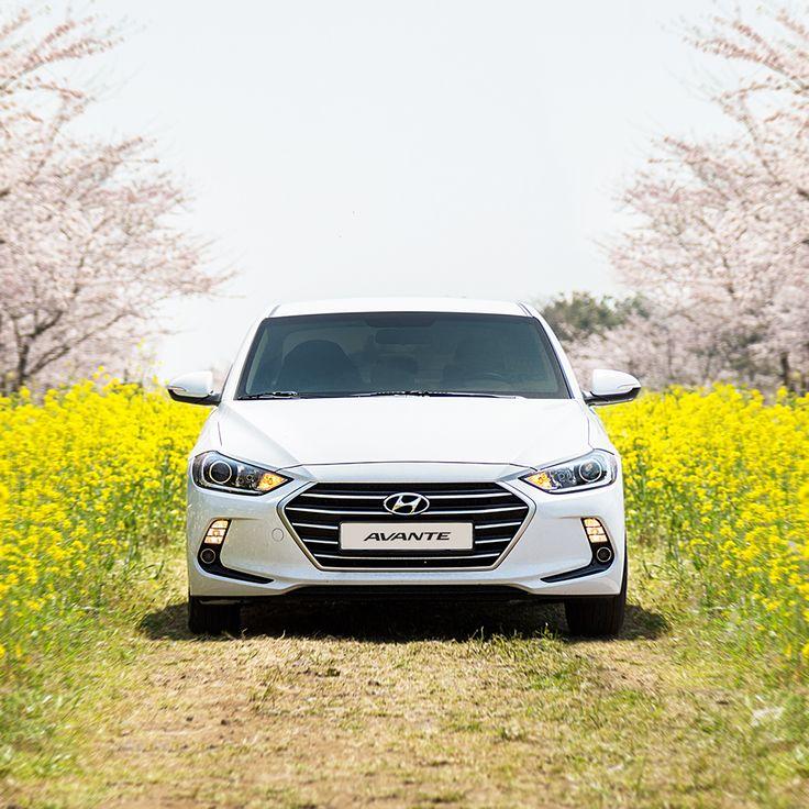 포근한 #봄날 , #제주 의 #봄꽃 그리고 #현대자동차 #아반떼 와 함께라면 즐거운 #드라이브 준비 완료!  Be ready for a #pleasant #drive with the warm #spring days, spring flowers of #Jeju and #Hyundai #Motor #AVANTE ( #Elantra )   #car #front #grill #lamp #travelling #flower #photo #daily #라디에이터 #램프 #벚꽃 #유채꽃 #여행 #일상 #데일리 #자동차그램