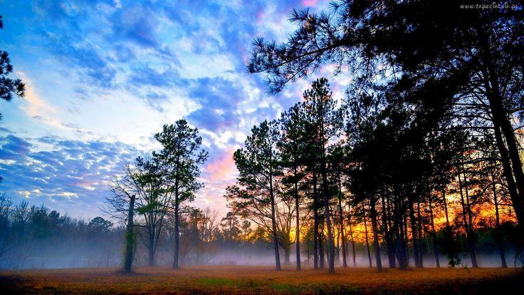 Las, Mgła, Chmury, Świt