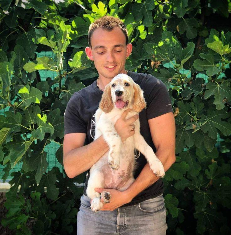 Voilà le petit nouveau de cette année 2017. Néo Du Sous Bois De Balmette. Fils de Isère Du Sous Bois De Balmette et de Eskobar De Bassegas. �� merci @bastien_dupire pour la photo. #englishsetter #setteranglais #baby #babydog #setter #peluche #lemon #hunt #hunter #becasse #becaccia #caccia #french #france #2017 #instamoment #instagramer #instalover #sun #summer #happy #mignon http://misstagram.com/ipost/1563043791454389771/?code=BWxDAwGBMYL