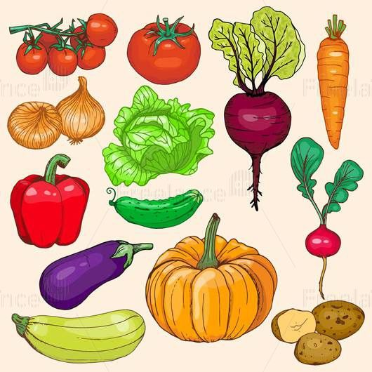 Vector illustration, sketch. A set of vegetables. Buy, sell ready-made graphics.
