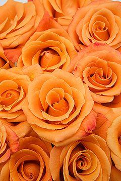 Orange Unique rose LOVE IT