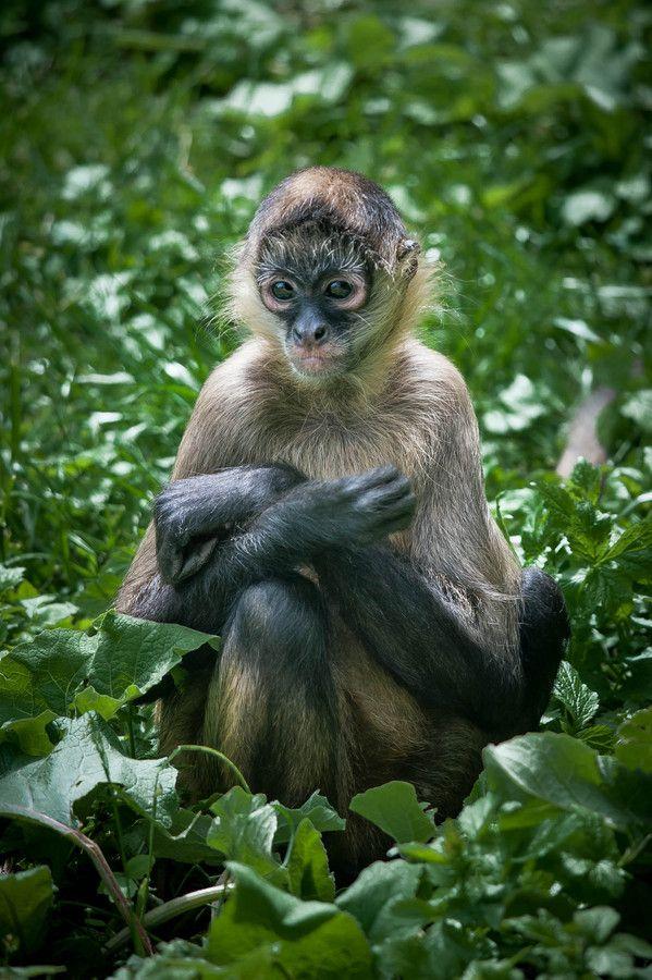 """500px / Foto """"macaco tímido"""" por Justin Lo"""