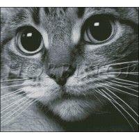 "Схема вышивки ""Котик-обормотик"""