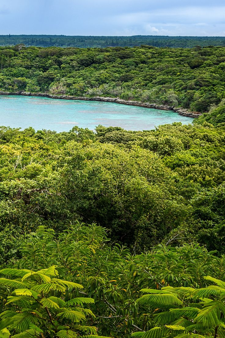 Jinek in Lifou island, New Caledonia.
