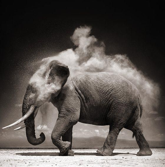 Pinspire - Nick Brandt