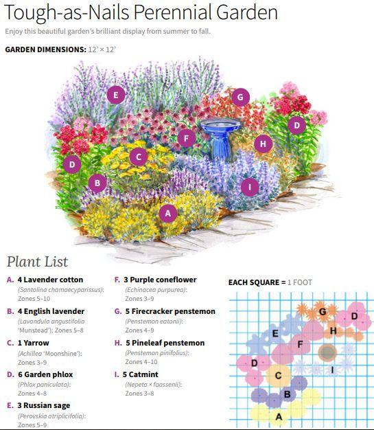 Tough-as-Nails-Staudengartenplan – Pflanzen im Freien
