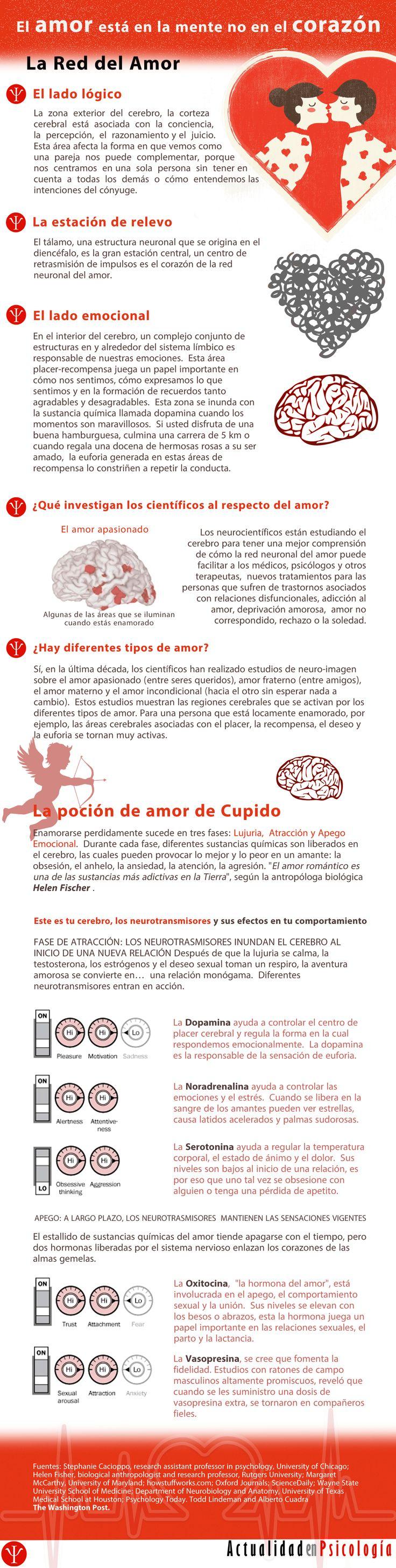 infografía: el amor está en la mente no en el corazón. responde a la pregunta ¿Qué es el amor?