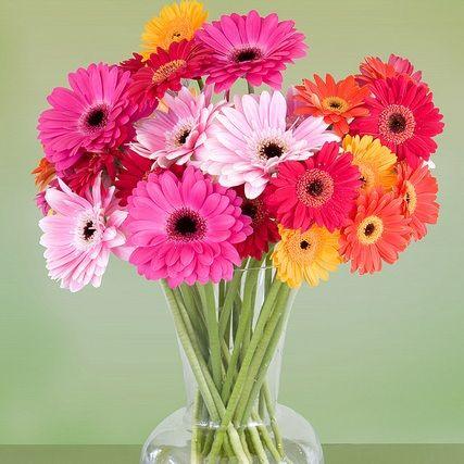 gerbera daisy centerpieces for weddings | Wedding Flower Pictures - Wedding Flower Pictures . | Wedding, Bouquet ...