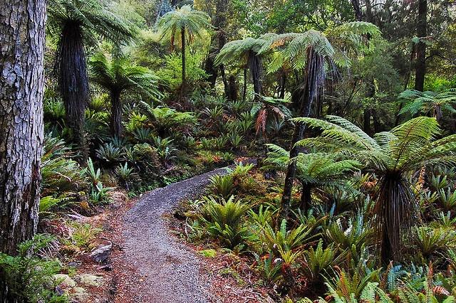 Rakiura Track, Stewart Island / NZ / fern / pathway / green