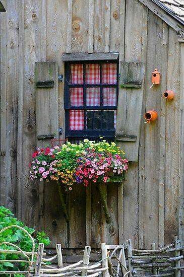 reminds me of the terracotta pot bird houses we made for our Fischers :)