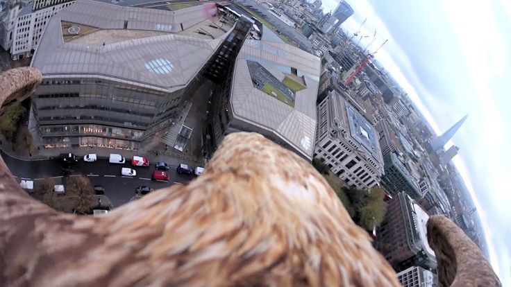 An Eagle Flies from St Paul's Cathedral