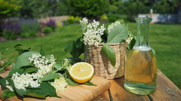 Sezona bylinek je právě v nejlepším. Rostou, kvetou, voní a chutnají. Pokud jich máte tolik, že nevíte, co s nimi, nebo byste si jejich aroma rádi uchovali i na zimu, máte několik možností, jak s nimi naložit.
