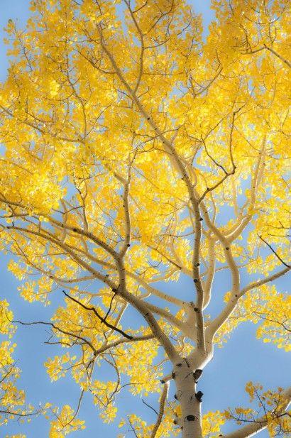 Árvore Amarela - Dan Ballard | Crie seu quadro com essa imagem https://www.onthewall.com.br/paisagem/arvore-amarela #quadro #canvas #moldura