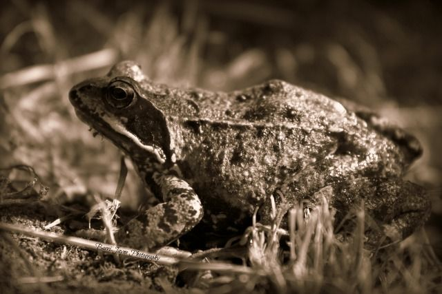 Rupikonna on Suomen ainoa konnalaji. Kaikki eivät erota rupisammakkoa tavallisesta sammakosta, mutta nystyröiden peittämä iho ja konnamainen ulkoasu on helppo erottaa.