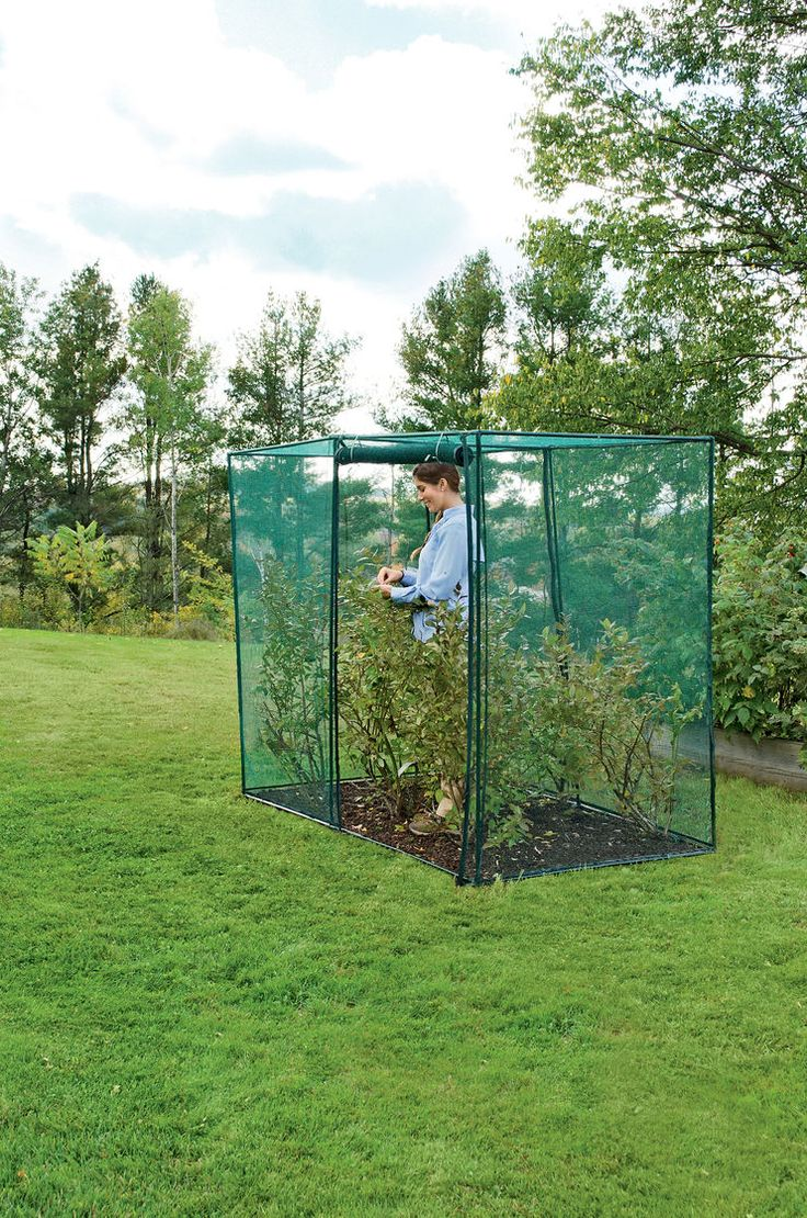 Crop Cage, 4' x 8' x 6' Tall   Blueberry Bush Covers   Crop Protection