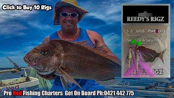 Snapper Fishing  Reedy's Snapper snatcher Rig. Video catching reds from around Australia Waters. Year going to be a Cracking Season grab Reedy's Rigz for your tackle Box today.  Tied Tackle Perfect Snapper Rigs.
